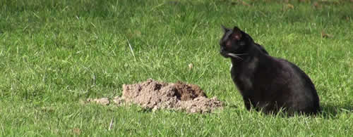 How to not kill a gopher with cats