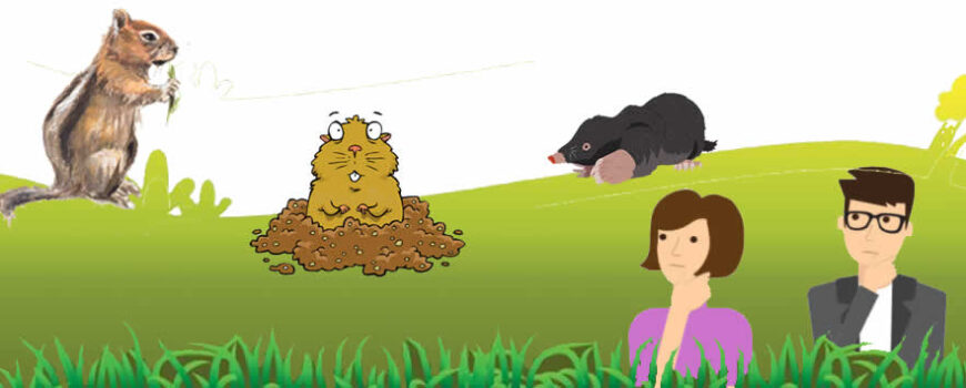How to Identify the Mounds and Holes of Gophers, Moles and Ground Squirrels
